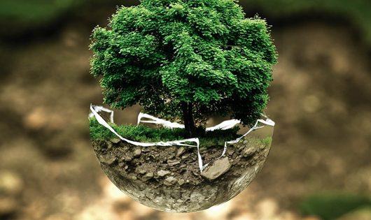 albero, proteggere