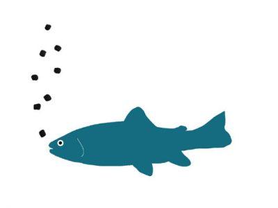 alimentazione trota progetto sushin
